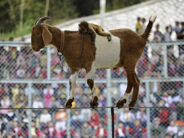 Cabra e macaco são atração em zoológico na China (Foto: Agência Reuters)
