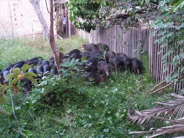 Alguns animais chegaram a ficar encurralados em casas  (Foto: Arquivo pessoal)