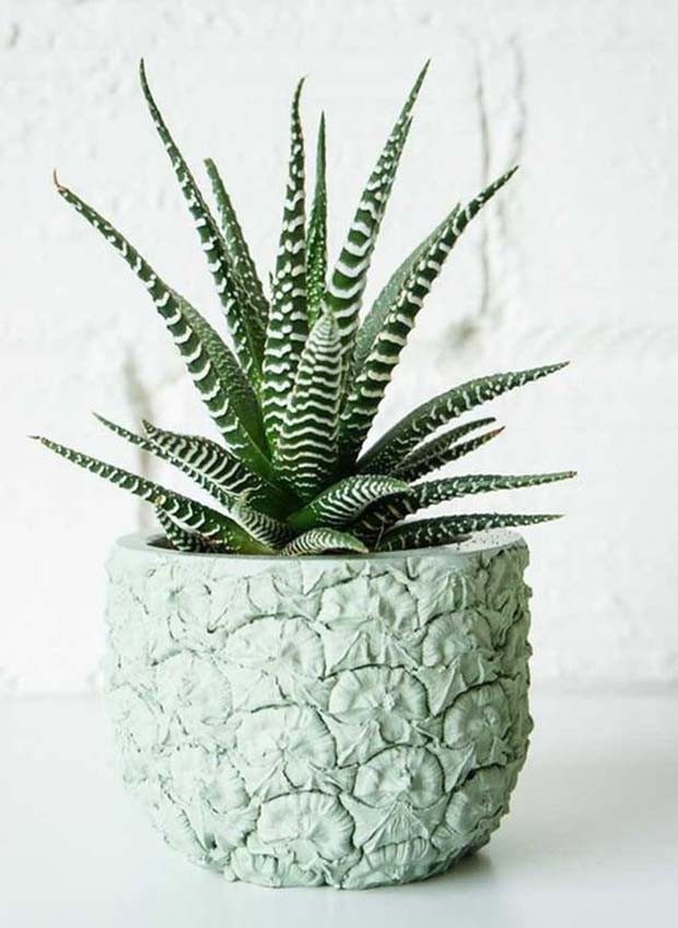 Haworthia Fasciata (Foto: Pinterest/Reprodução)