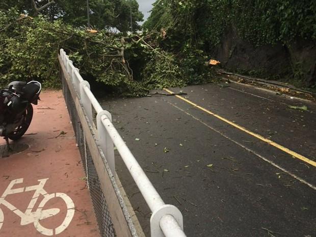 Árvore caiu em tarde de forte chuva próximo à ciclovia da Avenida Niemeyer (Foto: Reprodução/Parceiros do Vidiga)