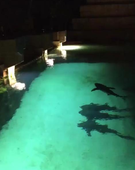 Piscina com tubarões: você pularia? (Foto: Reprodução/Instagram)