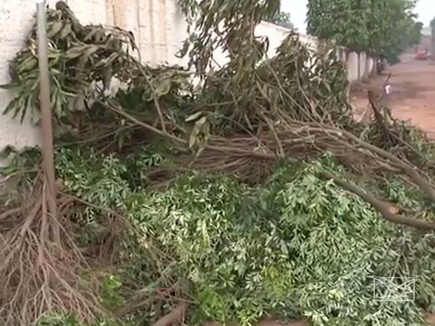 Chuva em Açailândia veio acompanhada de vendaval e derrubou árvores (Foto: Reprodução/TV Mirante)