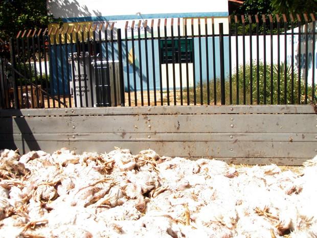 Empresário levou 'carga' de frangos mortos à sede da Eletrobras em Campo Maior (Foto: Cícero Lopes/ Arquivo Pessoal)
