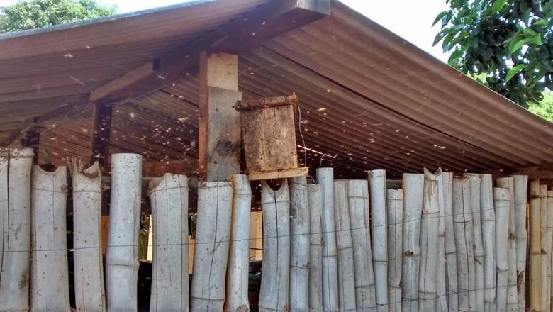 gr-responde-ninho-armadilha-abelha-avicultura (Foto: Dani Simon)
