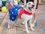 Seu cãozinho pode aparecer na tela da TV Fronteira! Saiba como participar!