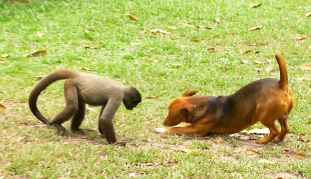 Amizade inusitada entre cachorro e macaco é destaque no Terra da Gente (Foto: Reprodução / EPTV)