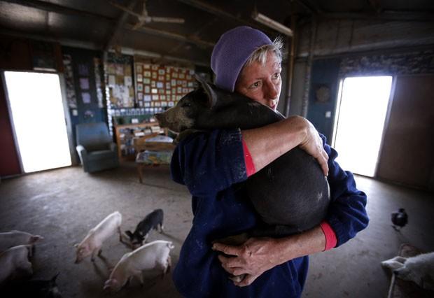 Lindy Haynes conta com mais de 25 porcos (Foto: David Gray/Reuters)