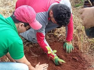 plantio árvores Ribeirão São Lourenço mata ciliar Ituiutaba (Foto: Divulgação/ Ascom Ituiutaba)