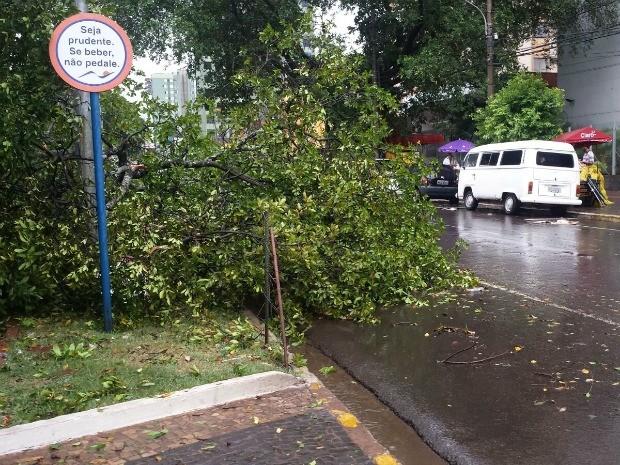 Árvore caiu em canteiro da avenida Afonso Pena (Foto: Alexandre Cabral/TV Morena)