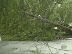 Temporal tem ventos de até 143 km/h na região de Campinas, diz Cepagri