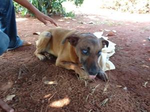 Cão foi encontrado dentro de saco plástico (Foto: Apas/Divulgação)