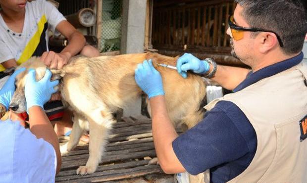 Animais domésticos também recebem a atenção, sobretudo para evitar possíveis doenças (Foto: Divulgação/World Animal Protection)