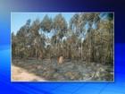 Incêndio em área de vegetação mobiliza a Defesa Civil em Cabreúva