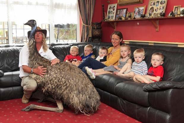 """Além dos seis filhos pequenos, o casal britânico Iain e Lisa Newby  mantém uma ema como animal de estimação em sua casa em Southend,  na Inglaterra. A ave chamada """"Beaky"""" é como um sétimo filho para Iain e Lisa. A ema compartilha com a família diversas atividades diárias, como a hora das refeições e de assistir a programas de TV. (Foto: Nick Obank/Barcroft Media/Getty Images)"""
