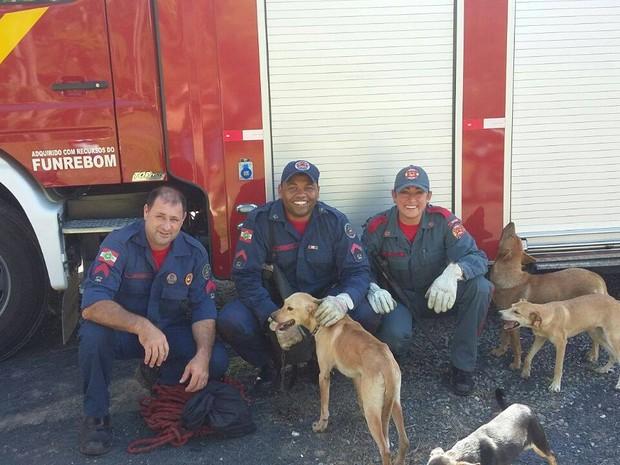 Animais foram resgatados de buraco com cerca de 30 metros de profundidade (Foto: Bombeiros/Divulgação)