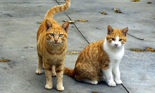 Gatos - gato - cat (Foto: Pexels)