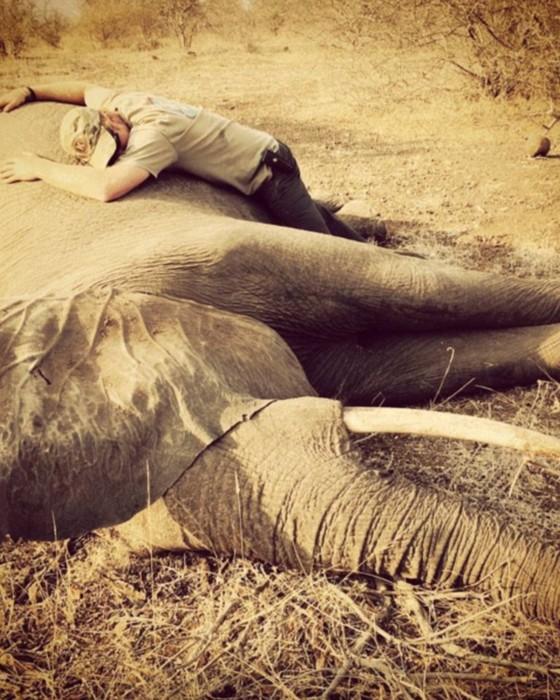 Príncipe Harry abraça elefante sedado para receber tratamento na África  (Foto: Reprodução Instagram)