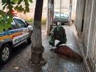 Moradores chamam polícia após capivara ser atropelada em Uberlândia