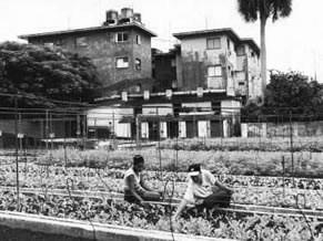 O modelo organoponico em Havana, Cuba (Foto: Reprodução)