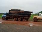 Falso plano de manejo 'esquentava' madeira ilegal em Mato Grosso