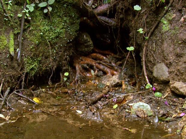 Rio Jaguari no Sul de Minas (Foto: Erlei Peixoto / EPTV)