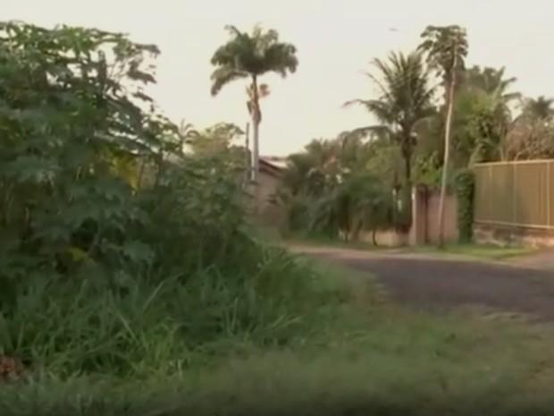 Mata onde o macaco foi encontrado em Rio Preto (Foto: Reprodução / TV TEM)