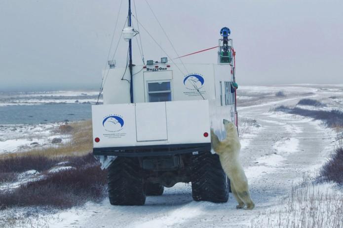 Urso interage com o buggy equipado com o trekker do Street View (foto: Reprodução/Google)