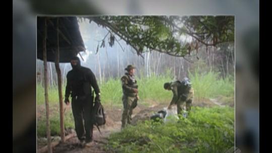 Polícia descobre plantação de maconha em Viseu, no Pará