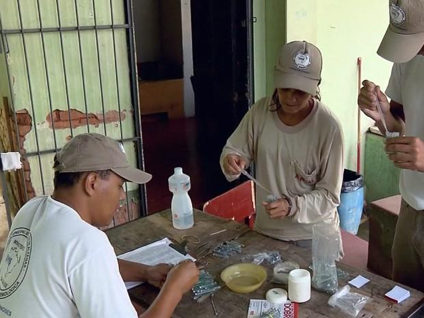 Número de notificações de casos de dengue aumentam em Alfenas (Foto: Reprodução EPTV)