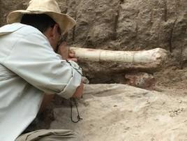 MG: fóssil do maior dinossauro do Brasil é retirado de montanha (Deborah Morato/G1)