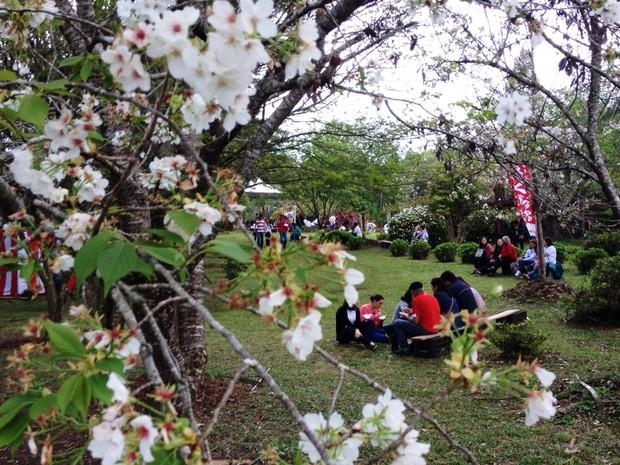 Festa celebra tradição japonesa na cidade (Foto: Eduardo Cristofoli/RBS TV)