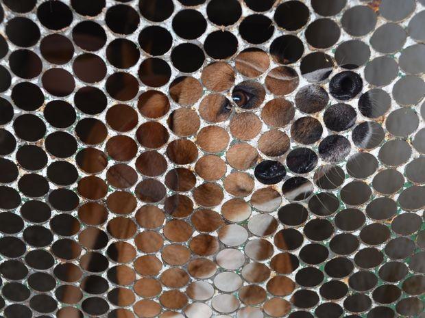 Animais aguardam novo lar em canil no Centro de Zoonoses (Foto: Marina Fontenele/G1 SE)