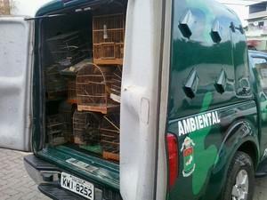Os pássaros serão encaminhados para o Centro de Pesquisa da Universidade Estadual Norte Fluminense (Uenf) (Foto: Divulgação/Polícia Ambiental)