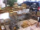 Polícia Civil apreende 100 pássaros silvestres em feira livre de Natal