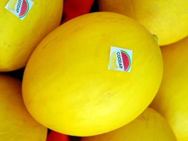 Produtos como melão elevaram as exportações potiguares em janeiro. (Foto: Divulgação / Sebrae)