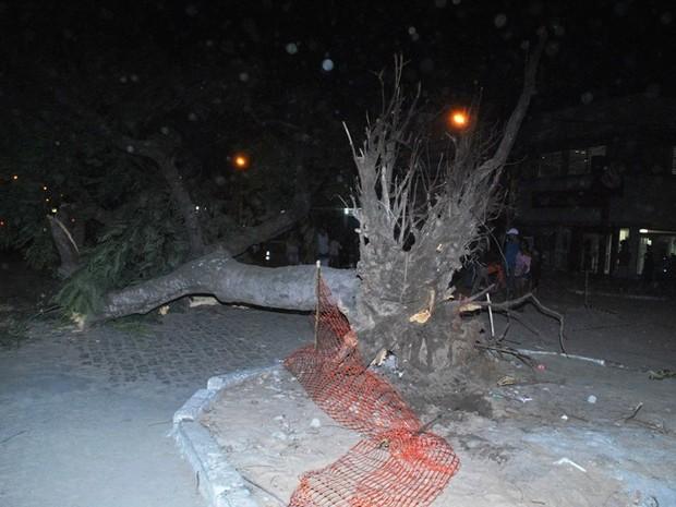 Árvore foi derrubada pelo vento e atingiu casal (Foto: Filipe Lemos/Campos 24 horas)