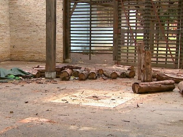 Orquidário de São Carlos (Foto: Reprodução EPTV)