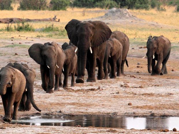 Elefantes são fotografados em parque nacional do Zimbábue, em foto de 2014  (Foto: Reuters/Philimon Bulawayo/File Photo)