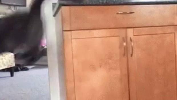 Felino salta sobre a porta e acaba fechando o armário (Foto: Reprodução/Reddit/SAFE4WORKS)