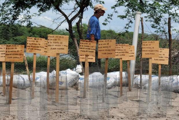 Placas com informações sobre ovos de tartaruga foram colocadas em praia de Honduras (Foto: Orlando Sierra/AFP)