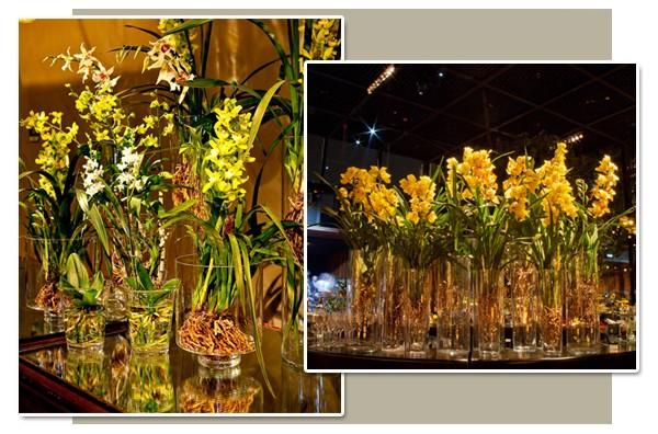 Orquídeas com raiz lavada (Foto: Graziella Widman / Ezyê Moleda)