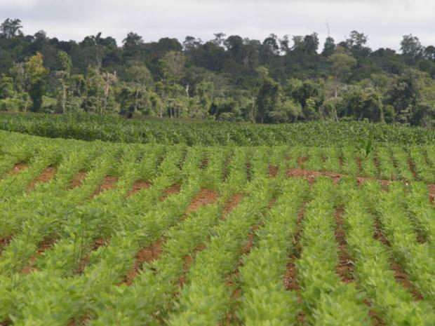 Plantação de soja em Paragominas, sul do Pará (Foto: Fernando Araujo/O Liberal)