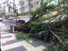 Rajadas de vento provocam quedas de árvores em Guarujá e Mongaguá