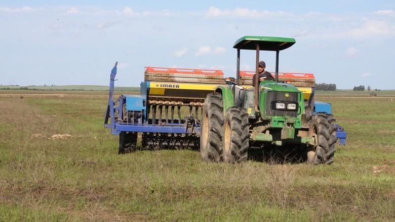 agricultura_arroz_plantio (Foto: Irga)