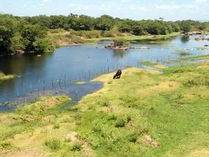 Trecho do rio em Jardim de Piranhas onde usuários captam água (Foto: Flávia Barros/Arquivo pessoal)