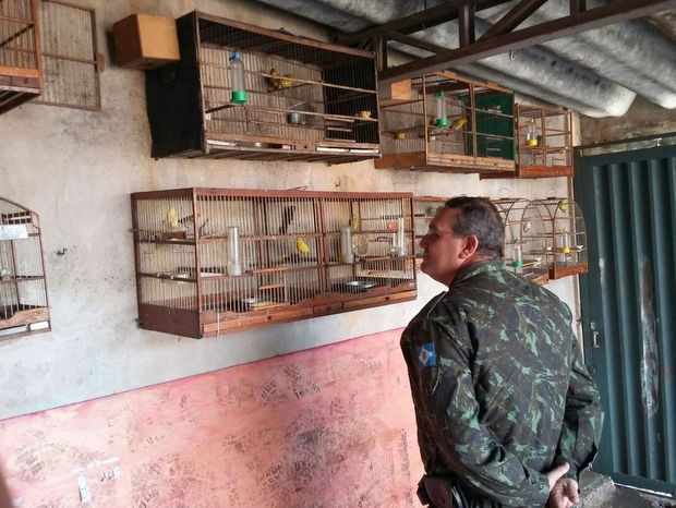 Apreensão de aves em Limeira (Foto: GM de Limeira/Divulgação)