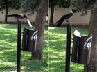 Corvo faz sucesso ao recolher lixo de gramado e colocá-lo em lixeira