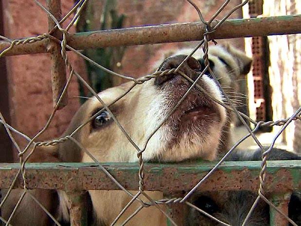Animais de estimação são tema do EPTV Comunidade (Foto: Reprodução / EPTV)