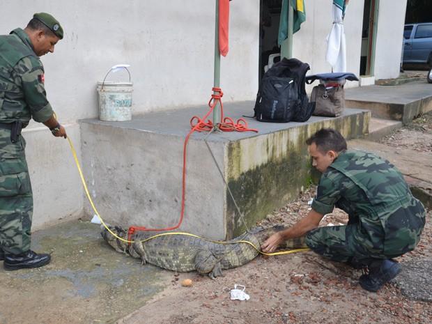 Animais serão levados para o Centro de Triagem de Animais Silvestres (Cetras) do Ibama (Foto: Walter Paparazzo/G1)