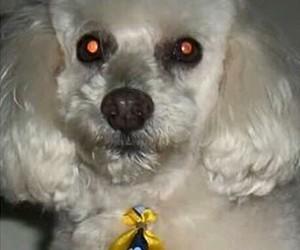 Theo - Cães Desaparecidos - Caminhada do Amicão 2015 (Foto: Divulgação)